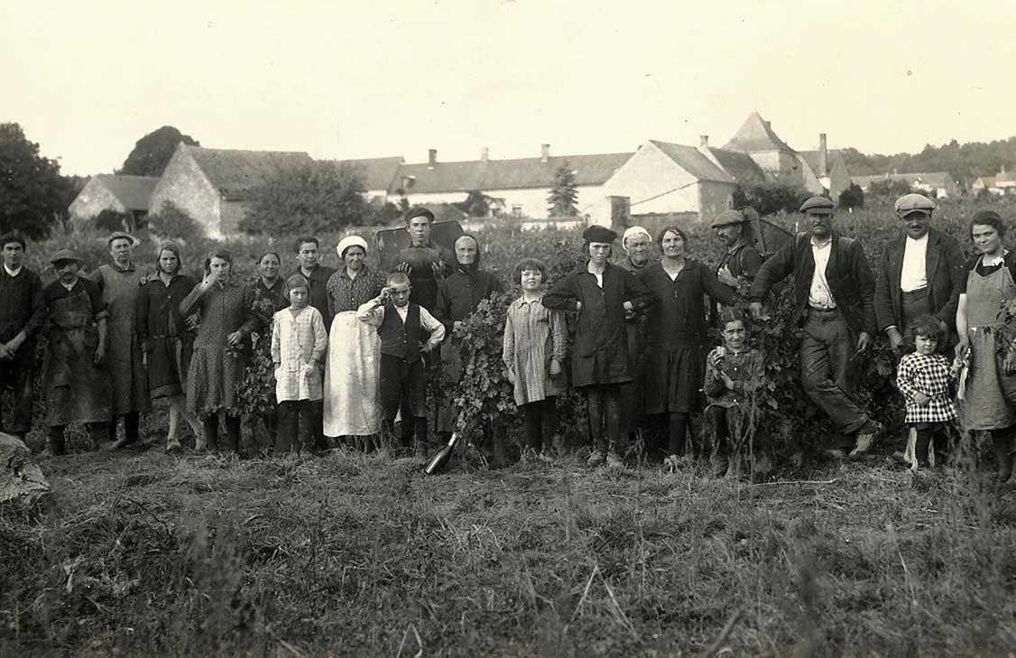 Carte postale de 1920 montrant la famille Caslot au moment des vendanges